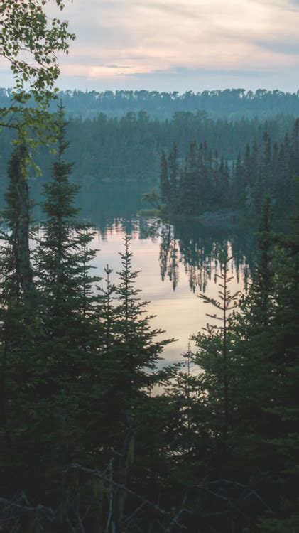forest lockscreen tumblr