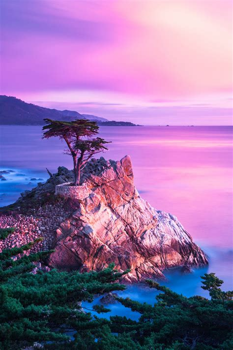 The Lone Cypress Tree Monterey CA | Scenery, Natural ...