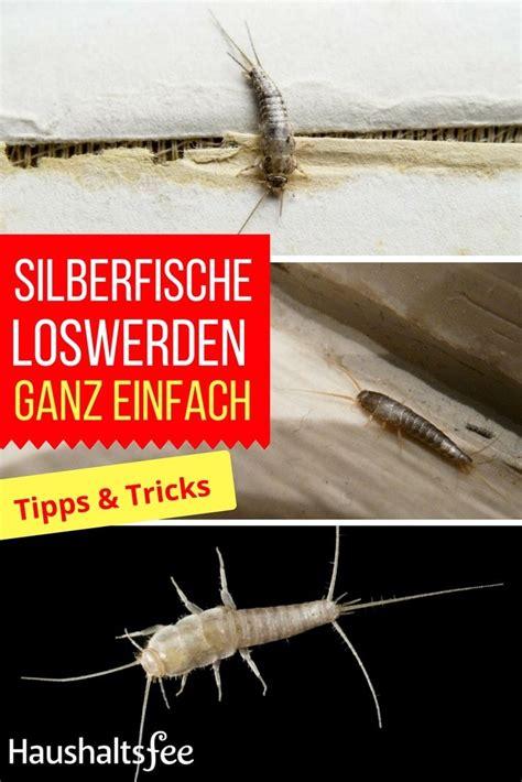 silberfische im haus silberfische bek 228 mpfen beste tipps tricks haushalt silberfische hausstaubmilben und