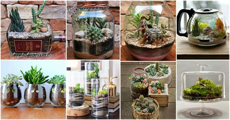 Cool And Creative Terrarium Ideas That Will Beautify Your Home