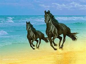 Black Horses Wallpapers - Entertainment Only