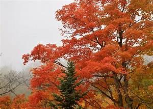 Fall Hiking Green Mountain NF Vermont | Sierra Club Outings  Fall