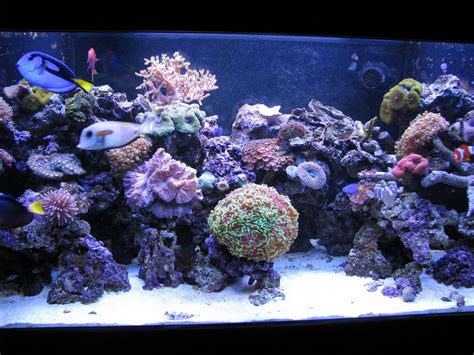saltwater aquariums new wave aquaria my reef aquarium