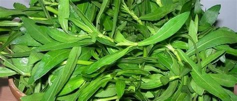 keerai greens bunch  nutrition kamalas corner