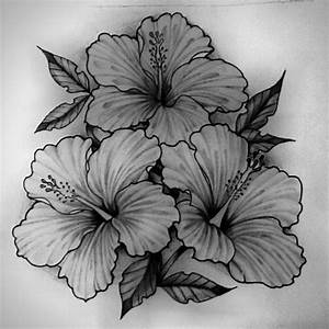 Hibiscus Flower Drawing | www.imgkid.com - The Image Kid ...