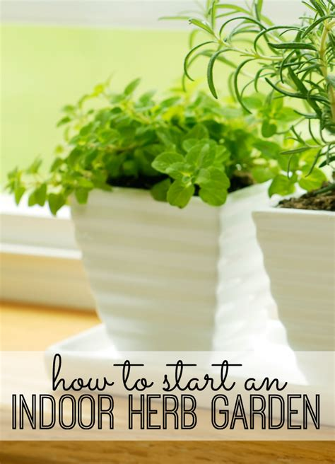 How To Start An Indoor Herb Garden  My Life And Kids