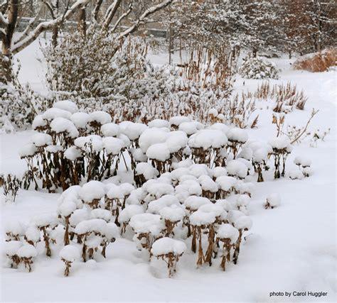 winter interest alberta perennial trials