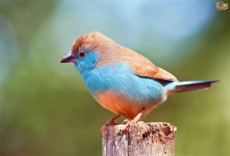 a guide to exotic finches pets4homes