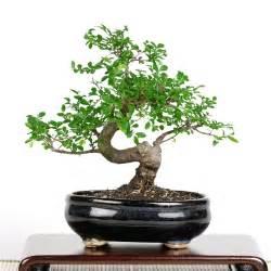 Tea Tree Oil Bath Photo