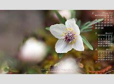 2018年2月の自然カレンダー壁紙:節分草3|無料ワイド高画質壁紙館