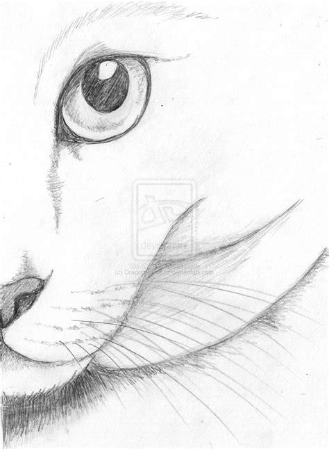 cat eye sketch  dragonprincezz  deviantart