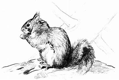 Squirrel Coloring Pages Wildlife Animals