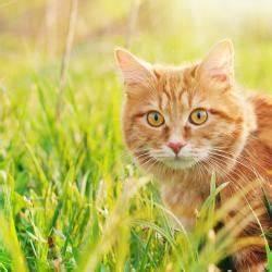 Hund Im Garten Vergraben : katzenkot im garten unterbinden mein sch ner garten ~ Lizthompson.info Haus und Dekorationen