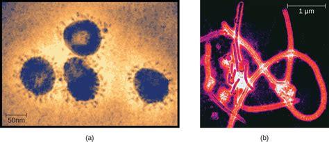 Common Cold Virus Under Microscope