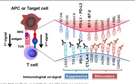 Cancer Immunotherapies Targeting The Pd-1 Signaling