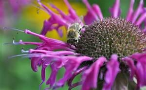 Welche Blumen Für Bienen : blumen bienen anlocken biologische forschung hummeln nutzen elektromagnetische felder wie ~ Eleganceandgraceweddings.com Haus und Dekorationen