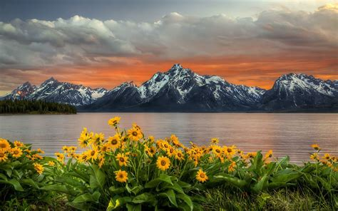 sunset  grand teton national park yellow sunflower