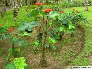 arbuste fleuri persistant en pot d 233 coration arbuste persistant en pot rouen 2721 arbuste pour haie jardiland arbuste fleuri