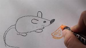Tiere Zeichnen Schritt Für Schritt Kinder Mit Unseren
