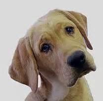 dog poop pick       regularly peoria