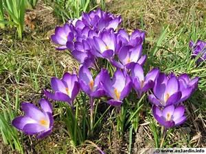 Planter Des Bulbes : planter des bulbes de printemps ~ Dallasstarsshop.com Idées de Décoration