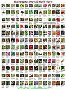 Ayurvedic Herb Chart Ayurveda Posters