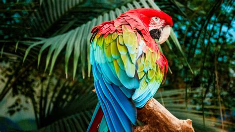2560x1440 Macaw Colorful Bird 4k 1440p Resolution Hd 4k