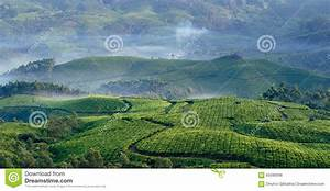 Mountain Tea Plantations In Munnar Stock Photo - Image of ...