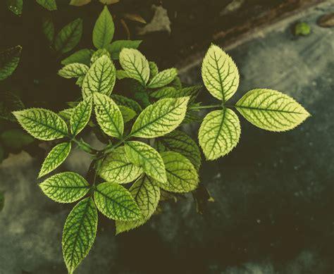 background daun hijau hd terbaru