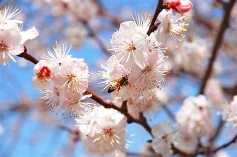 Free Images : nature branch fruit petal food spring