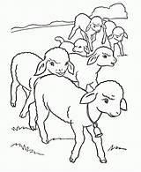 Coloring Sheep Pages Cute Popular sketch template