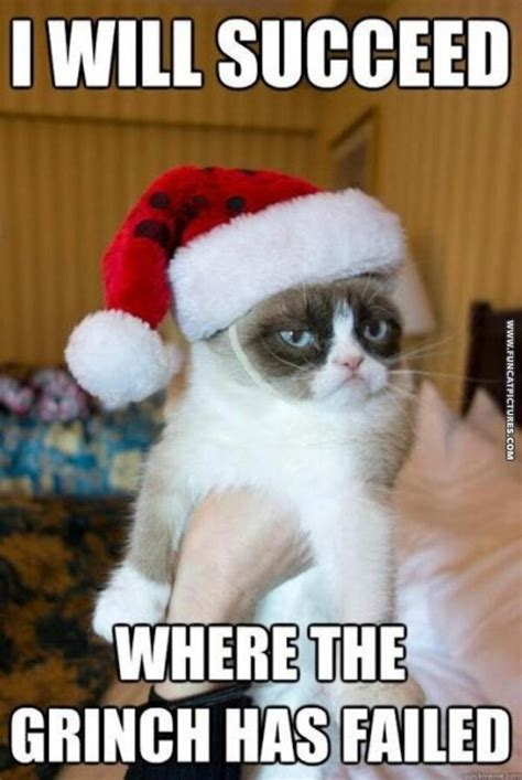Christmas Cat Memes - christmas fun cat pictures