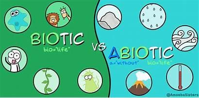 Biotic Abiotic Factors Science Biology Definition Components