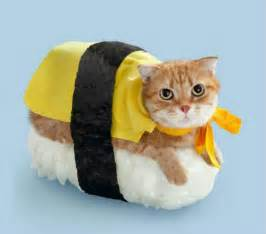japanese cat george stroumboulopoulos tonight sushi cats a new