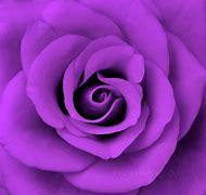 Neon Purple Roses