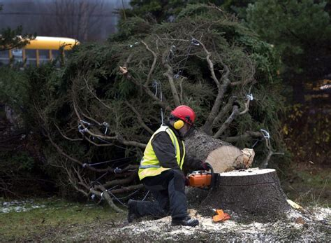 cost of christmas trees at orchard hardware tree prices on the rise amid shortage increase in demand the