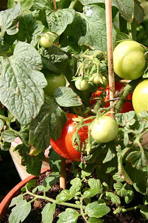 Gemüse Im Balkonkasten by Horizont 13 Gem 252 Se Vom Balkon