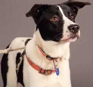146 best avid pets images on pinterest pets animal for Avid dog