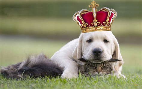 dogs cats better than why pets dog which dogsbreedscenter scientists smarter reveal versus depositphotos special