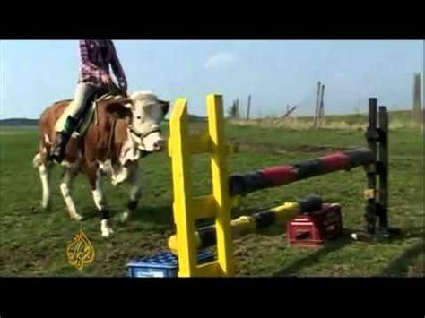 comment monter un cheval la r 233 ponse est sur admicile fr