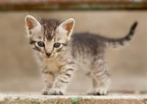 name a cat 10 most popular kitten names