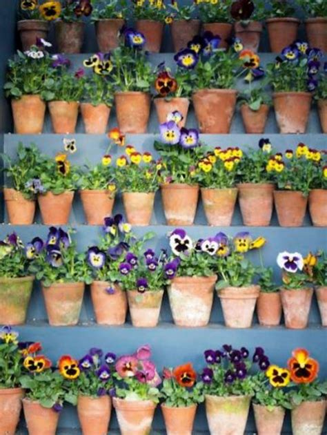 small flowering plants for pots pansies flowers in small clay pots jpg