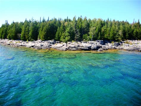 forest health  eastern georgian bay environment