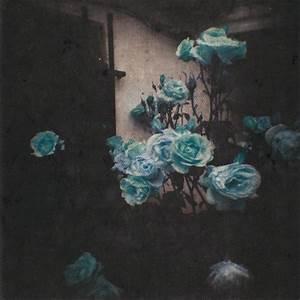 blue roses on Tumblr