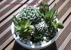 Plante Pour Jardin Japonais : diy mon jardin miniature de cactus et succulentes les ~ Dode.kayakingforconservation.com Idées de Décoration