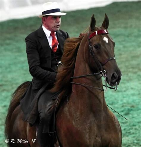 fair horse saddlebred championship american kentucky gaited outline schedule state association hufgefluester pony hackney county amateur