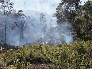 Mayan Slash And Burn | www.pixshark.com - Images Galleries ...