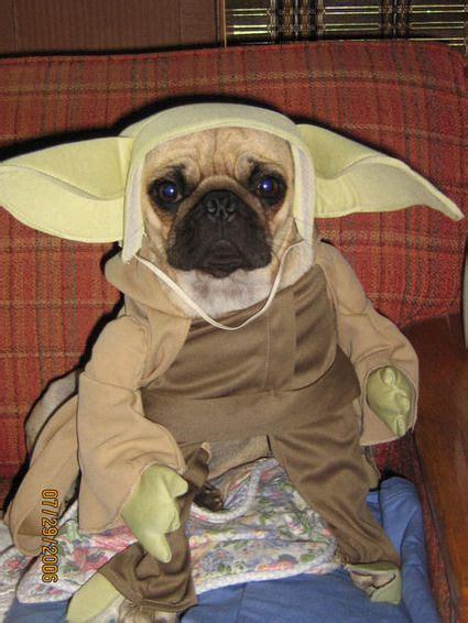 20 Pugs Dressed As Yoda & Darth Vader   Pugs, Dog costumes ...