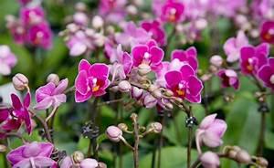 Orchideen Umtopfen Video : orchideen umtopfen so geht s richtig orchideen ~ Watch28wear.com Haus und Dekorationen