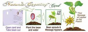 Nature U0026 39 S Greeting Card And Pepper Plant Seed